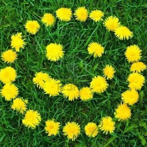 Maak een lente-mandala voor de Aarde - AFFLIGEM