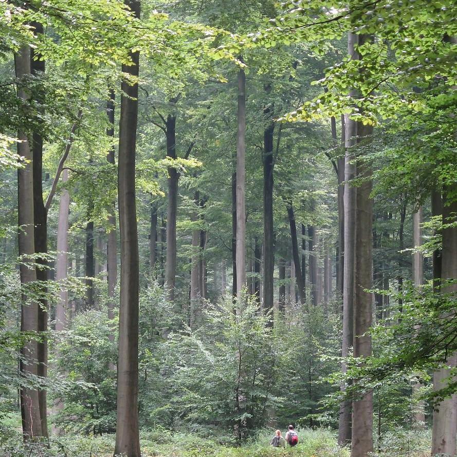 Exploratie van het Zoniënwoud en Jezus Eik