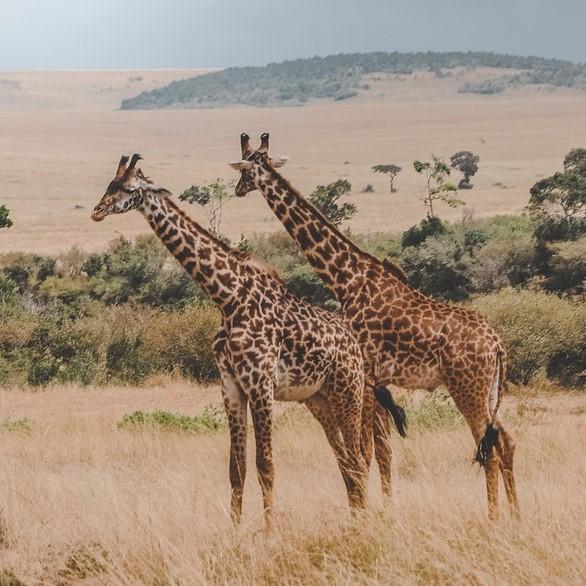 Exploreer de jakhals en de giraf in jou - Zonhoven